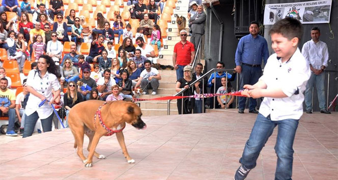 Çukurova'da en güzel köpek yarışmasıçukurova,en güzel köpek yarışması